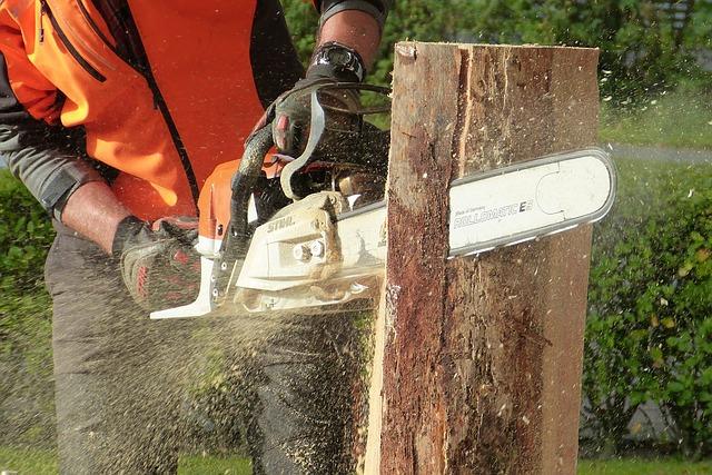 abattage d'arbres dans le 17